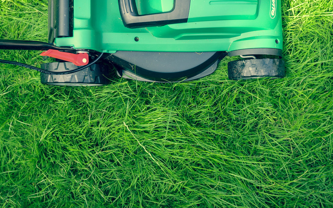 Spring Wake Up Lawn Care Tips